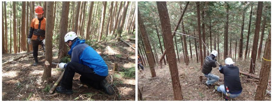 【イベント】山の体験シリーズ「間伐体験」を開催します