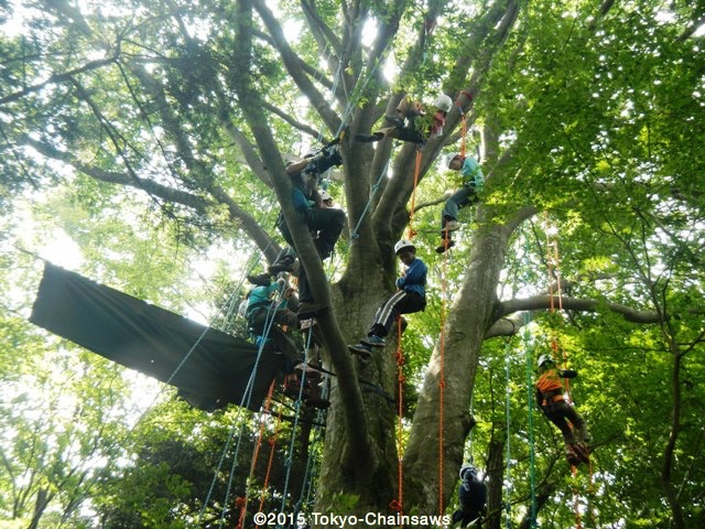 木登りイベント(7月28日)