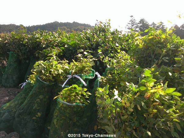 秋植えを待つ(10月31日)