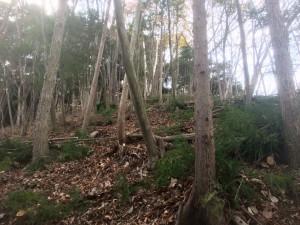 木を伐るお仕事