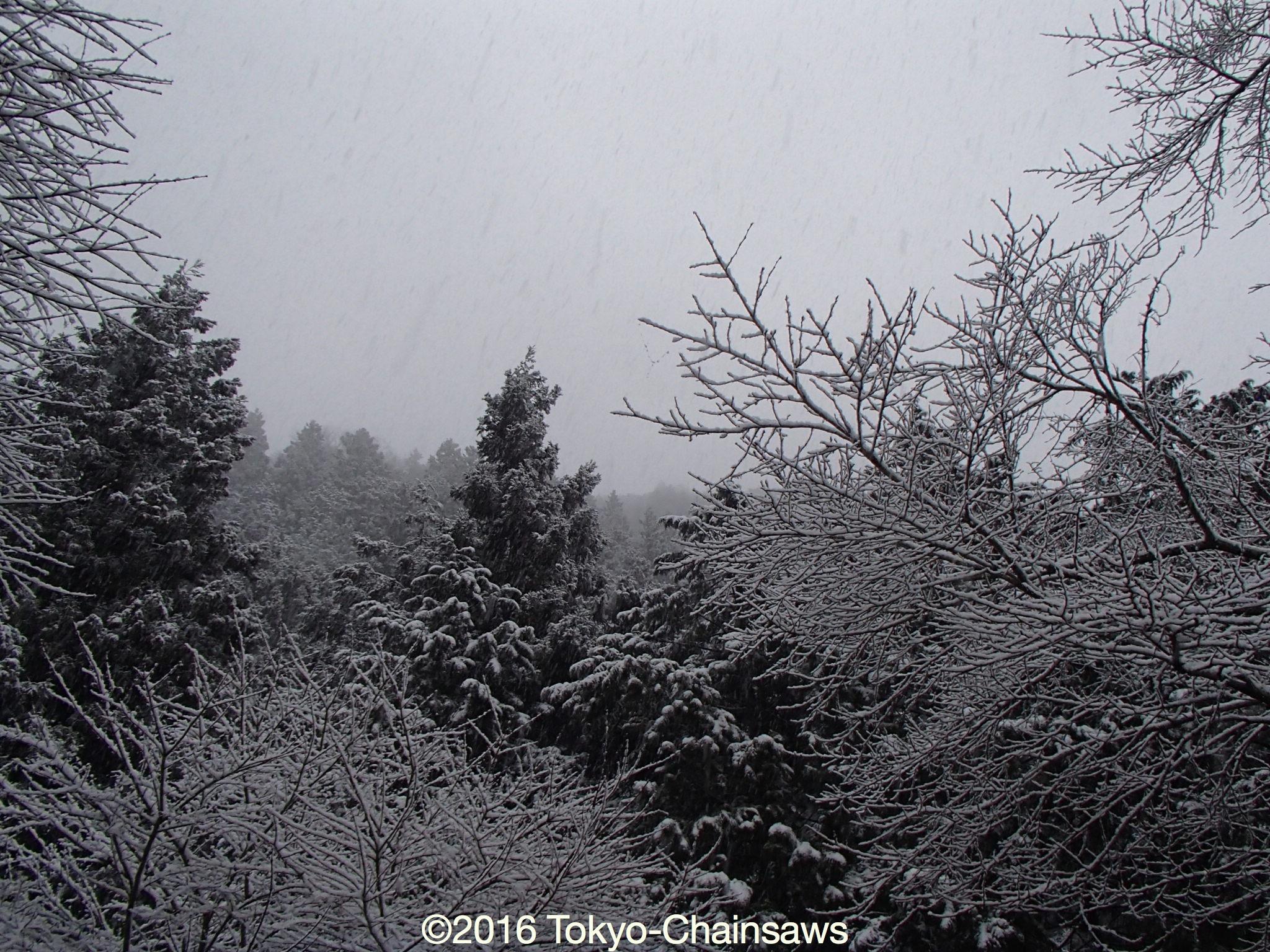また雪!(2月16日)