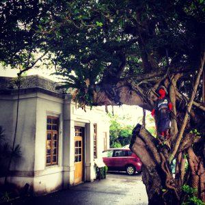 沖縄の妖怪、キジムナーにも出会えました