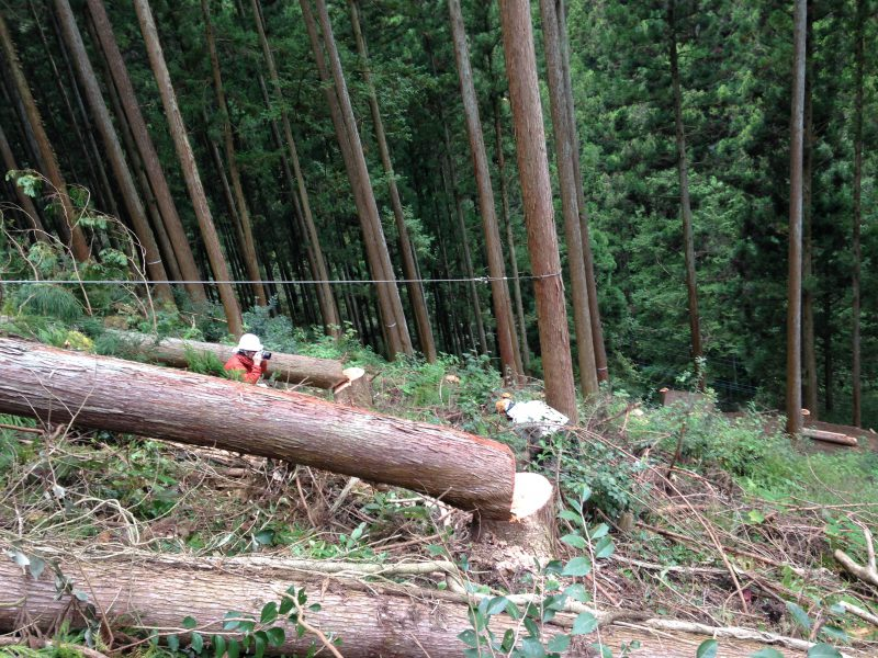林業のおいしいところ