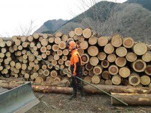 木を出す仕事
