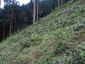 社有林 下刈り作業後